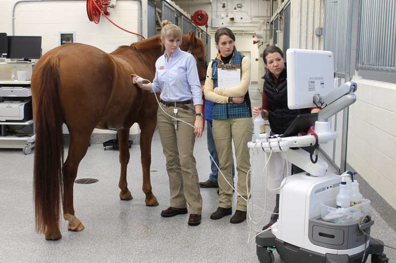 DVM students performing an ultrasound